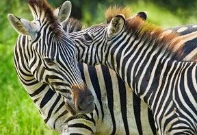 Wildlife of Akagera